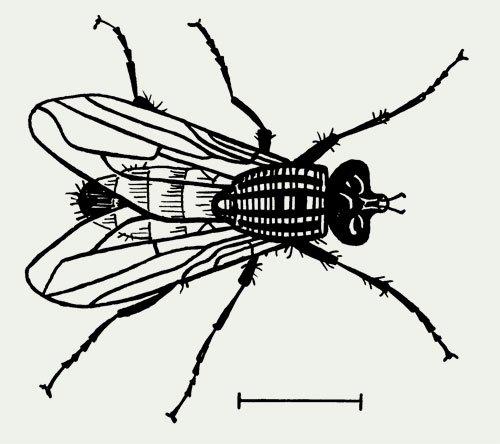 Fly_web